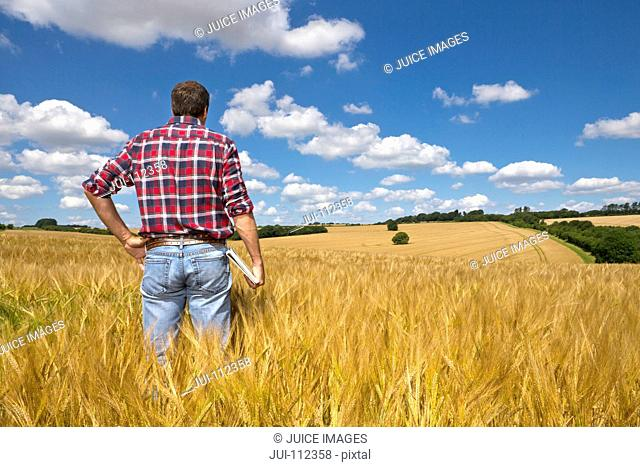 Farmer looking out over sunny rural barley crop field in summer