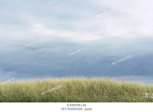 Cloudy sky and meadow