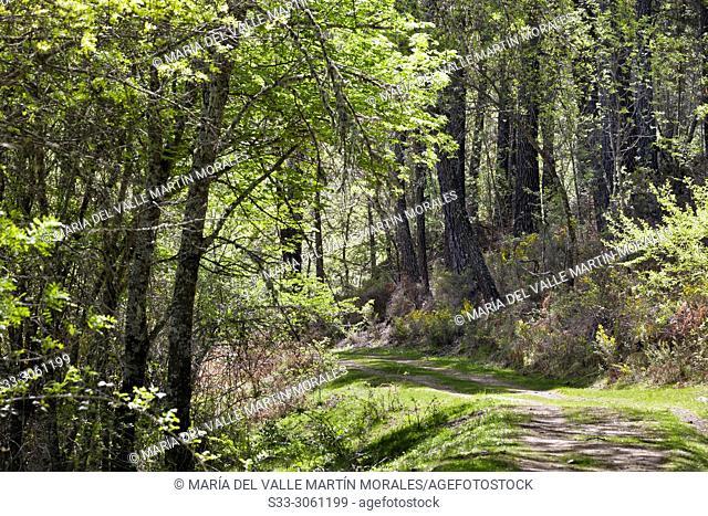 Spring at the Solana Toro path. Iruelas Valley. Avila province. Spain