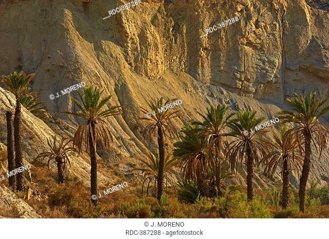 Tabernas Desert, Natural Park, Province of Almeria, Andalusia, Spain / Desierto de Tabernas