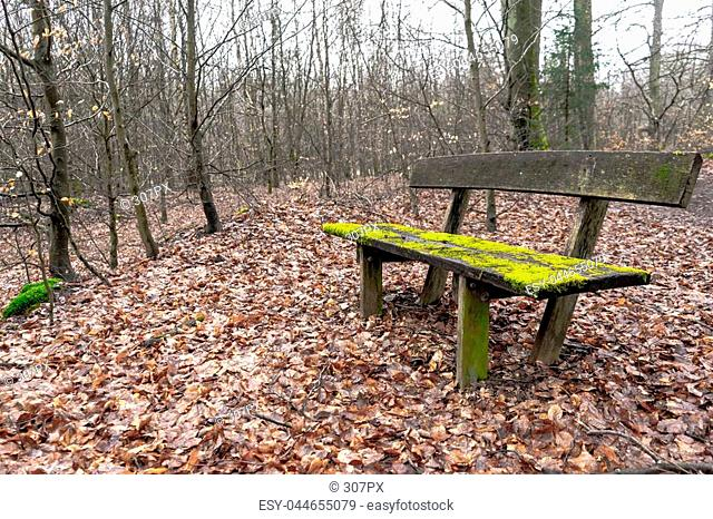 Very old wooden bench covered in moss in the middle of a forest. Shot in autumn, the ground is covered in brown leafes with skinny trees in the back