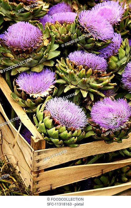 A crate of artichoke flowers