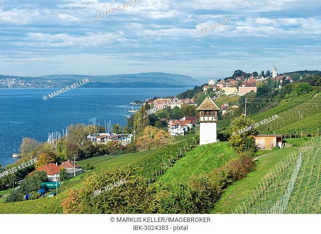 Historic Rebgut Haltnau vineyard on Lake Constance, with the town of Meersburg am Bodensee on the right, Lake Constance, Meersburg, Baden-Württemberg, Germany