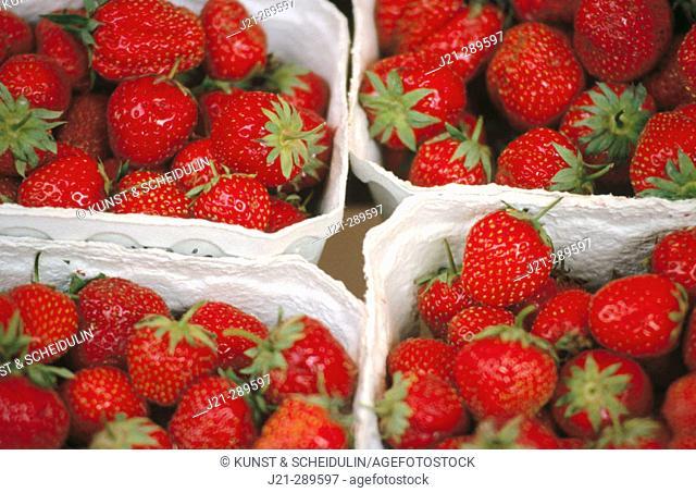 Strawberries on a market in Ratisboen. Bavaria, Germany