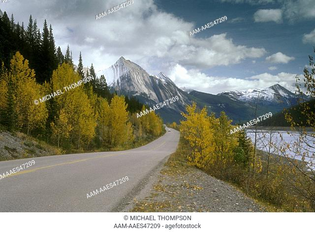Aspens in Fall on Maligne Lake Road at Medicine Lake, Jasper NP, Alberta, Canada