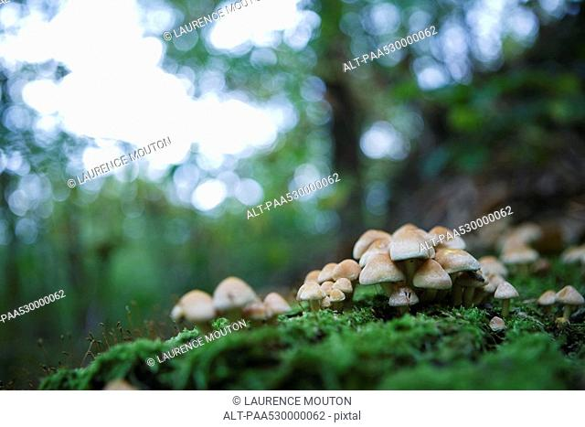 Cluster of mushrooms on the forest floor