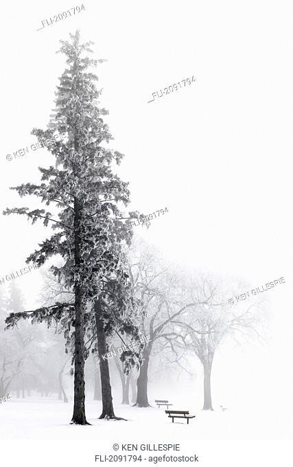 Ice fog in winter in assiniboine park, winnipeg, manitoba, canada