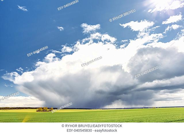Gomel, Belarus. Countryside Rural Field Or Meadow Landscape With Green Grass Under Scenic Spring Blue Dramatic Sky With White Fluffy Clouds