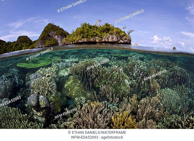 Corals in shallow Water, Raja Ampat, West Papua, Indonesia