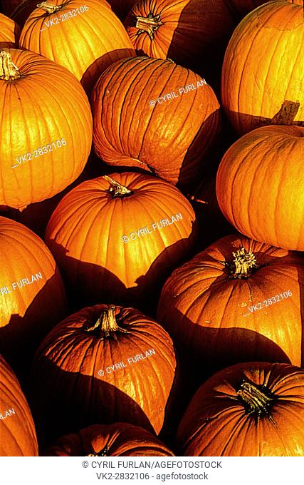 Pumpkins on display at a farmers market in