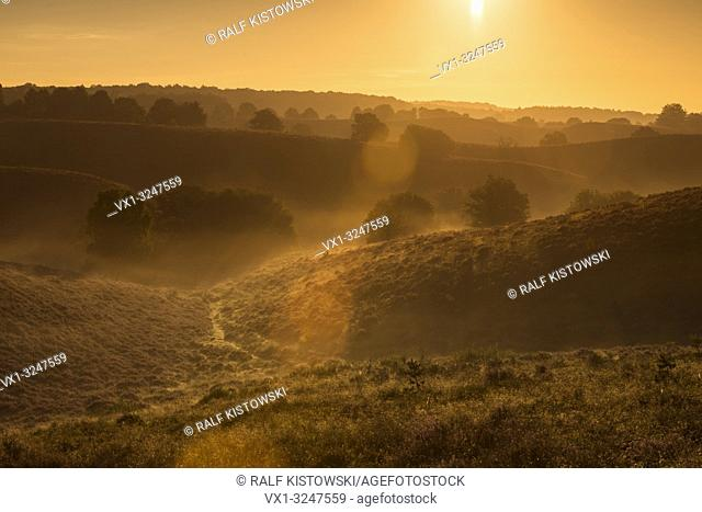 Sunrise above endless hills with blossoming heather and lonely trees, fog banks in the valleys, Veluwe ( Netherlands ), warm summer morning mood