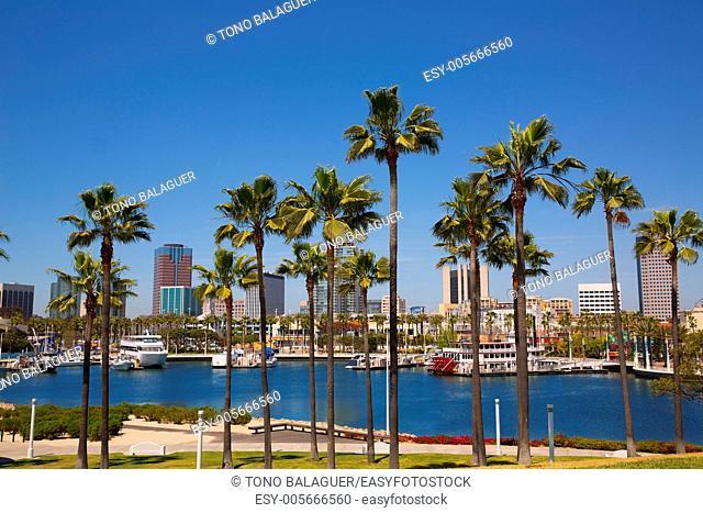 Long Beach California skyline with palm trees from marina port USA
