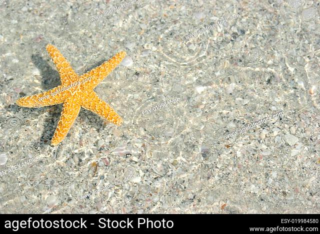 Starfish floating in shallow water