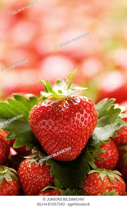 Strawberry (Fragaria x ananassa). Ripe strawberries. Germany