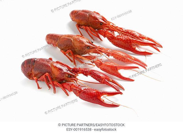 Cooked freshwater crayfishes on white background