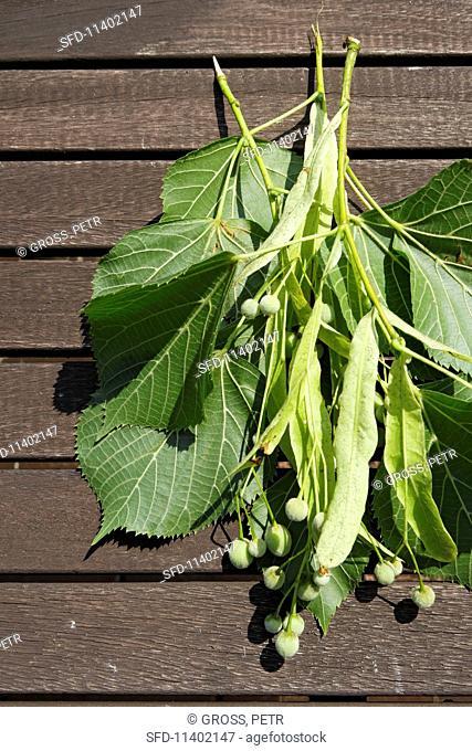 Linden fruits