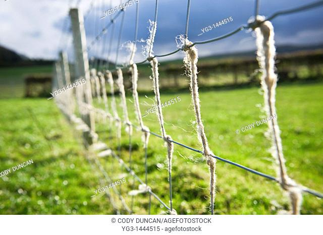 Wire fence with sheeps wool, Herefordshire, England