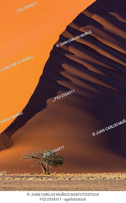 Sand dune in desert, Namib Naukluft National Park, Namibia