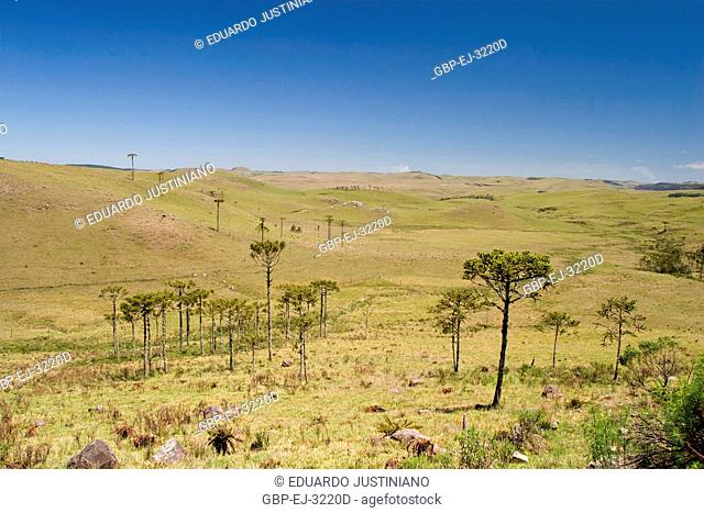 Physiognomy of Campos of Top with Forests of Araucaria, Araucaria angustifolia, São José dos Ausentes, Rio Grande do Sul, Brazil