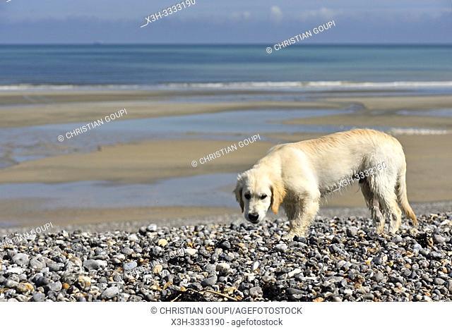 plage de Quiberville, departement de Seine-Maritime, region Normandie, France/beach of Quiberville, Seine-Maritime department, Normandy region, France