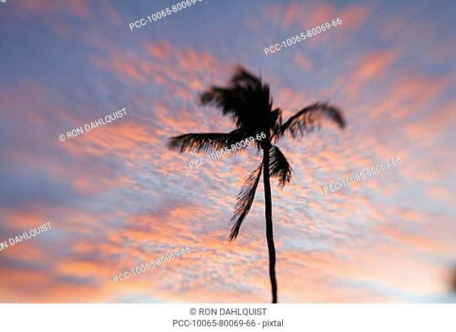 Hawaii, Palm tree with pink clouds at sunset