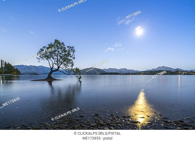 The lone tree in Lake Wanaka under the moonlight at dusk. Wanaka, Queenstown Lakes district, Otago region, South Island, New Zealand
