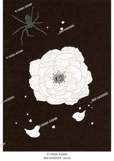 An illustration of a white flower and spider