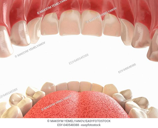 Teeth or dentures. Open human mouth upper and lower jaw. 3d illustration