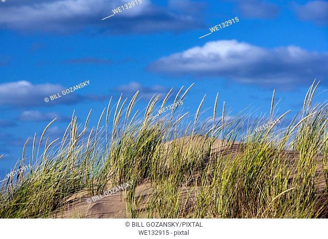 Sand dunes on Brackley Beach - Prince Edward Island, Canada