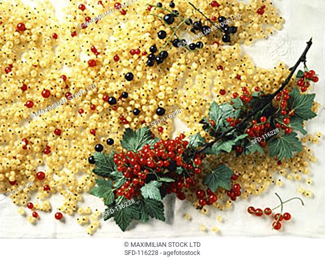 White Currants with a Branch of Red Currants