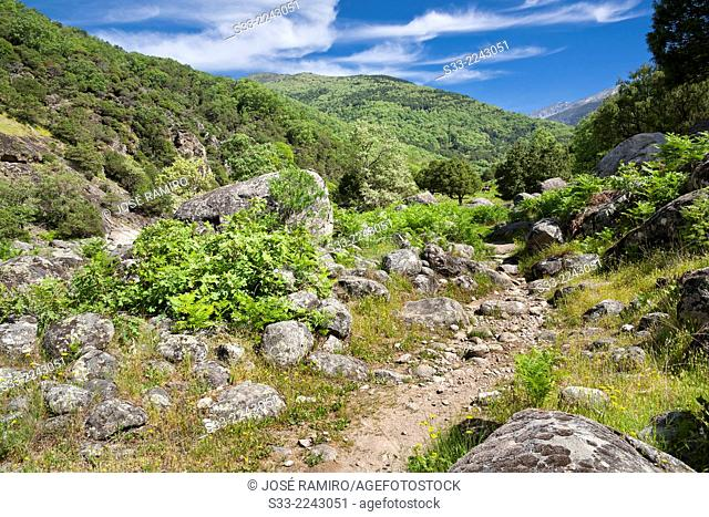 Path in the Santa María gorge in the Sierra de Gredos. Candeleda. Avila. Castilla Leon. Spain