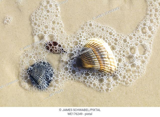 Close up of shells on Gulf of Mexico beach on St George Island in Florida in the United States