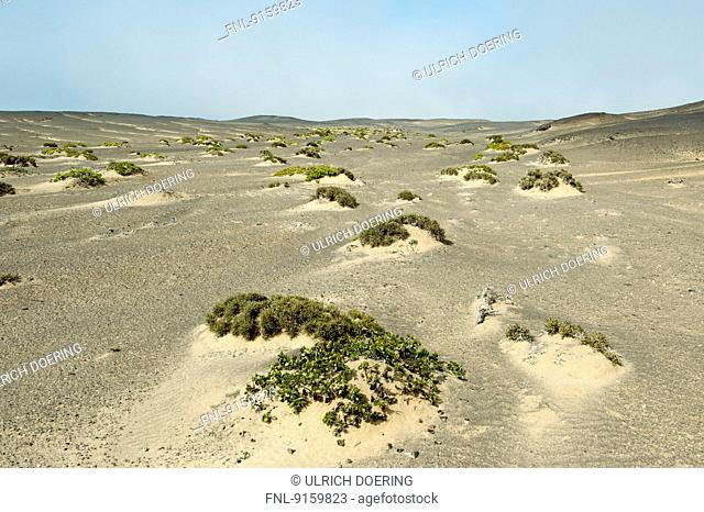 Sand dunes with sparse vegetation, Skeleton Coast National Park, Namibia