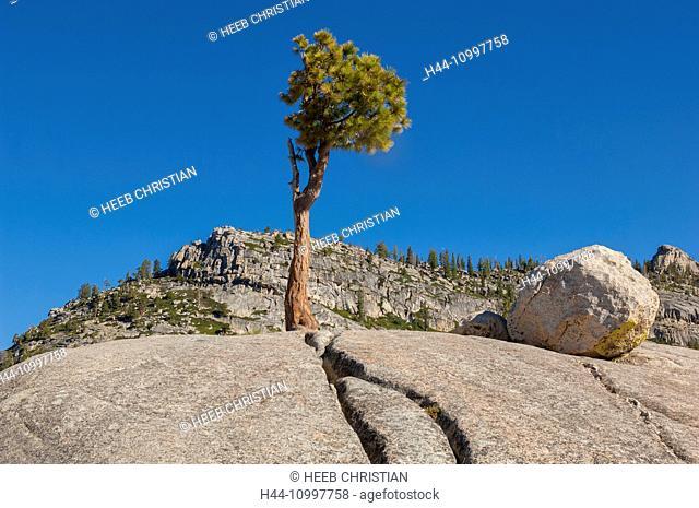 USA, California, Sierra Nevada, Yosemite, National Park, Tioga pass, granite dome along Tioga road