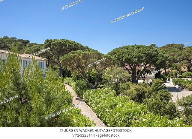 Pine trees, Saint-Aygulf, Var, Provence-Alpes-Cote d`Azur, France, Europe