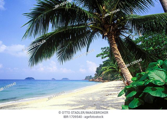 Coconut palm tree on Thanam Beach, Koh Chang Island, Trat, Thailand, Southeast Asia