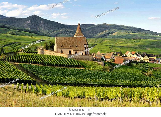 France, Haut Rhin, Alsace Wine Route, Hunawihr, labelled Les Plus Beaux Villages de France (The Most Beautiful Villages of France), St Hune church