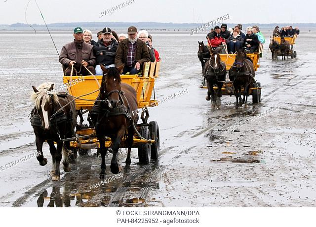 Mudflat carriages drive through the mudflat between Cuxhaven and the island of Neuwerk, Germany, 20 September 2016. The island at the mouth of the river Elbe...