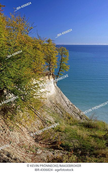 Trees on cliffs, Jasmund National Park, view of Baltic Sea, Sassnitz, Rügen, Mecklenburg-Western Pomerania