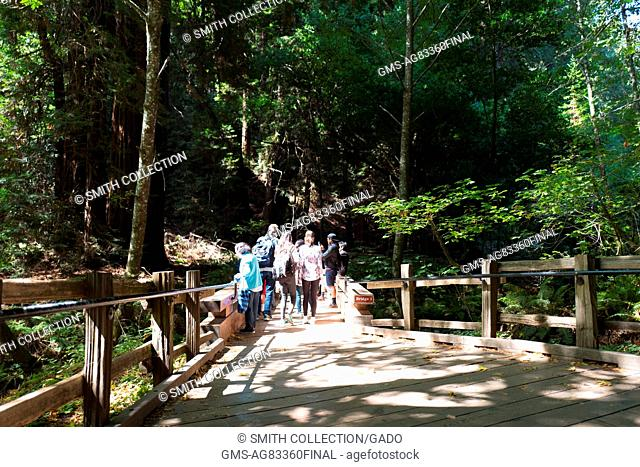 A group of tourists walk along a wooden walkway section of trail at Muir Woods National Monument, Mill Valley, California, September 5, 2016