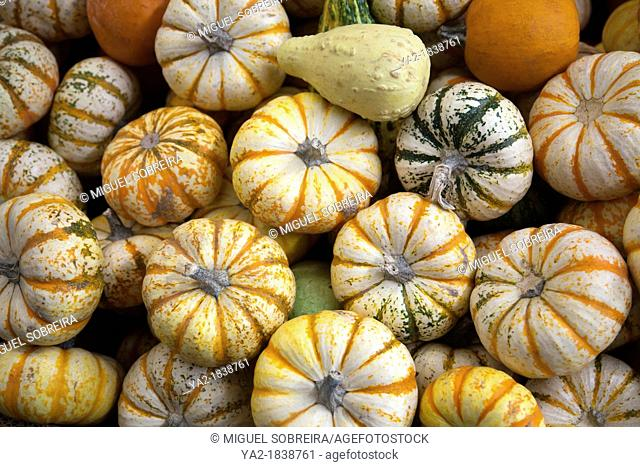 Pumpkin and Squah Varieties at Jamaica Market - Mexico City DF
