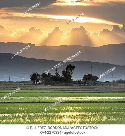 Ebro's Delta ricefields, San Carlos de la Rápita, Tarragona, Catalonia, Spain