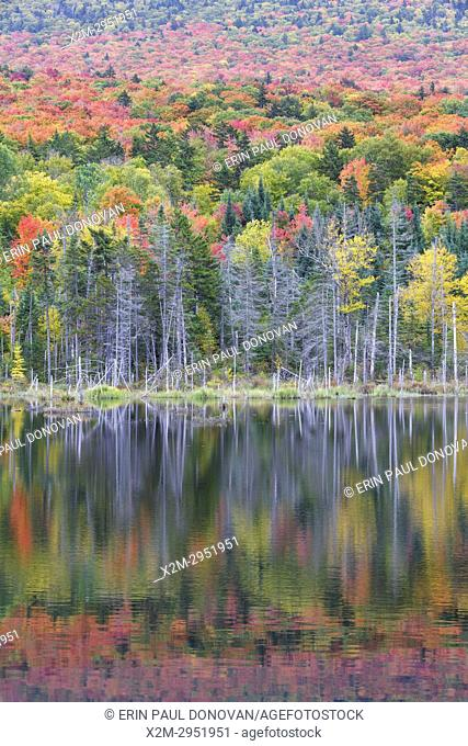 Reflection of autumn foliage on Mount Deception in a small pond along Old Cherry Mountain Road in Carroll, New Hampshire USA during the autumn months
