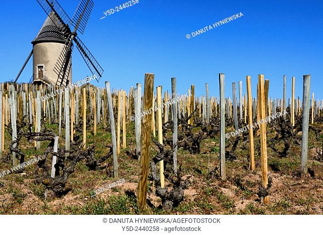 Iconic Moulin-a-Vent windmill, known as the King of Beaujolais for its power, structure and longevity, Moulin-à-Vent is the most atypical of all the Beaujolais...