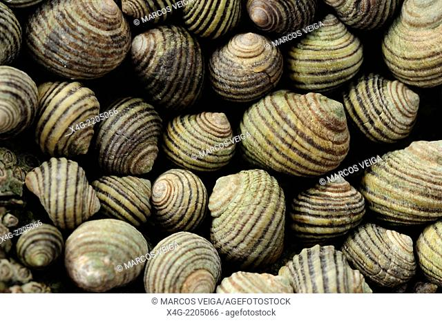 Group of marine winkles