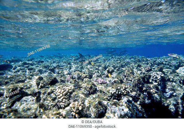 Barrier Reef. Red Sea