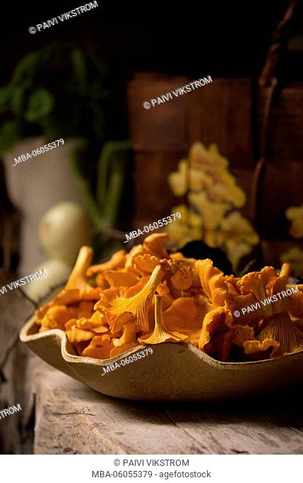 Autumn Chanterelles