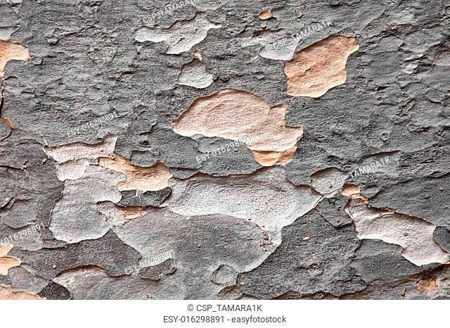 bark of Agathis dammara