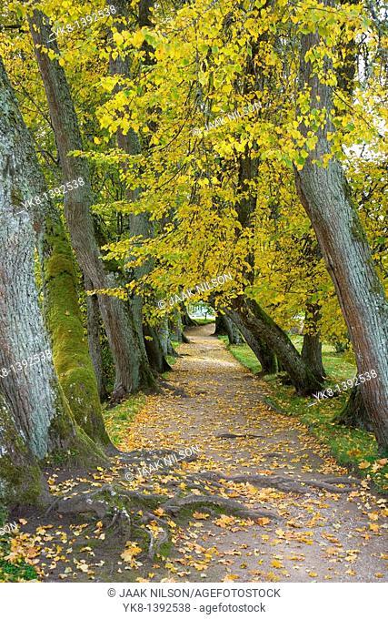 Alley in Palmse Manor, Lääne-Viru County, Estonia