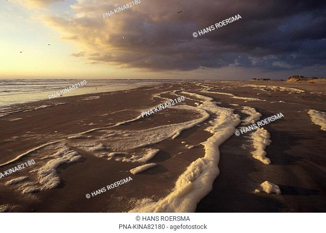 foam-algae Phaeocystis sp - Rottum, Rottumerplaat, Wadden Islands, Groningen, The Netherlands, Holland, Europe